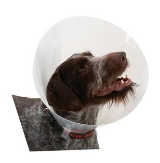 An image of Buster Classic Transparent Collar 7.5cm