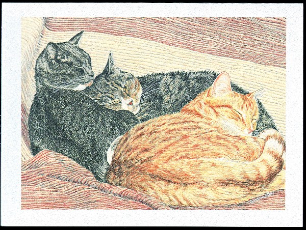 An image of Catnaps Deepest Sympathy Cards