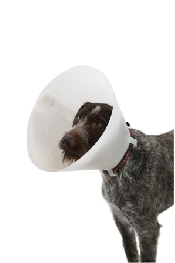 An image of BUSTER Classic Collar 35 cm