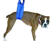 An image of Pet Lift