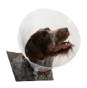 An image of Buster Classic Transparent Collar 35cm