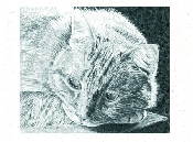 An image of Feline Sympathy Cards