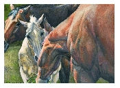 An image of Equine Sympathy Cards