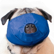 An image of Quick Muzzle Pug
