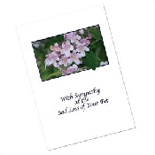 An image of Pet Sympathy Cards