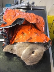 An image of Vet Warming Blanket Orange Small 77cm x 91cm (1)