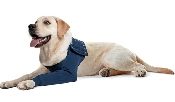 An image of Protective Sleeve for Fore Limbs - Canine